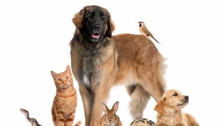 Pet Inheritance – The Rich and Furry