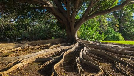 Family Tree Verification – don't rely on what the family tells you